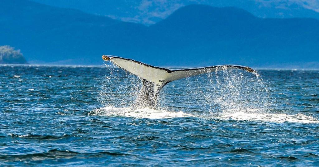 whales_strait_of_magellan
