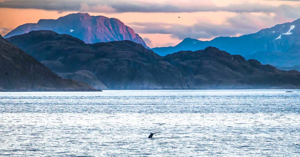 whales_strait_of_magellan-9