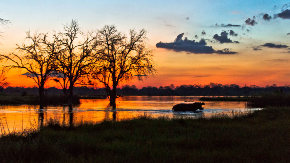 Sunset in Savuti with hippopotamus