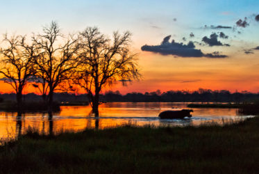 Sunset in Savuti with hippopotamus