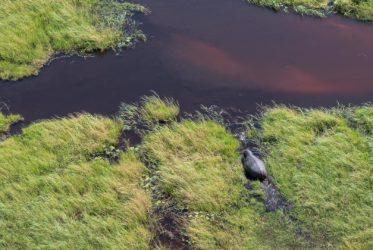 Okavango Hippopotamus from the air Belmond Safari