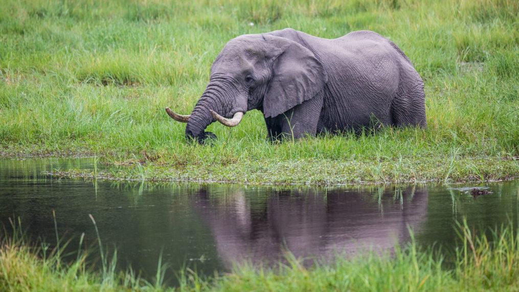 Savute Elephant Camp ... Elephant