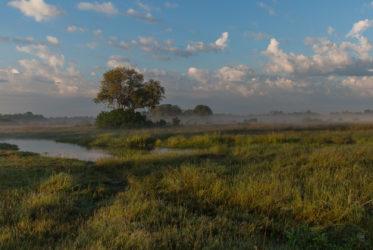 Sunrise in Savuti