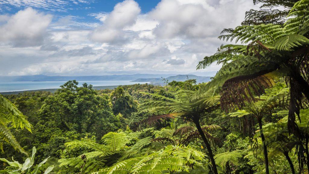 RainForest_Australia dla poczatkujacych