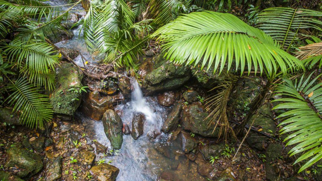 RainForest_Australia_Milesaway-2