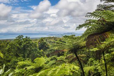 Rain Forest Queensland Milesaway