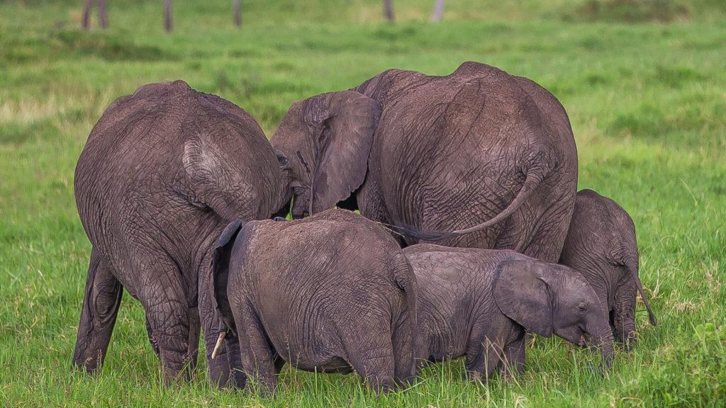 Rodzina słoniowa w komplecie