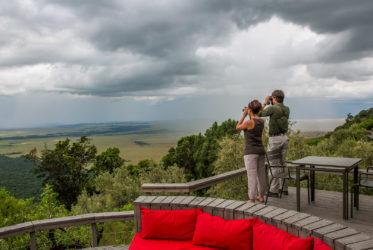 Agama Mara Safari