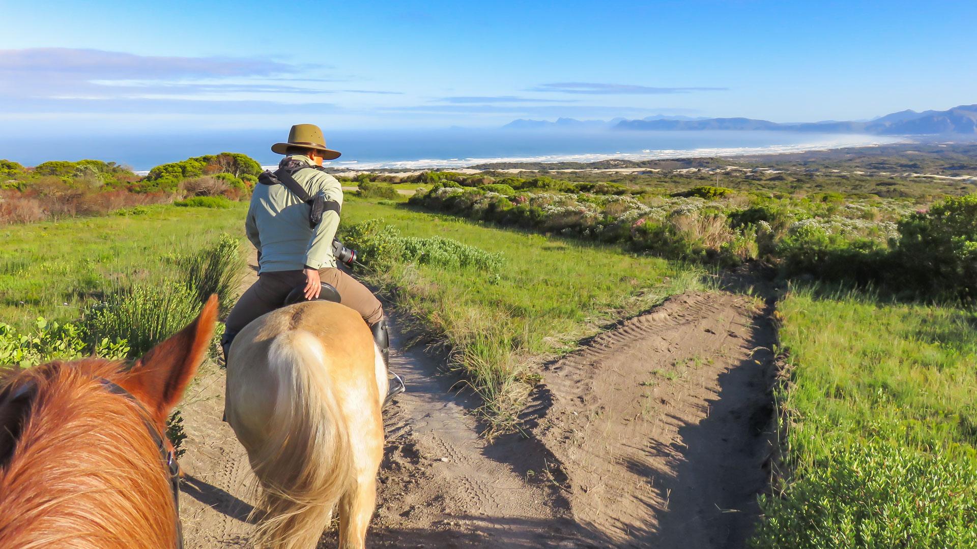 grootbos horseback riding & flynbos