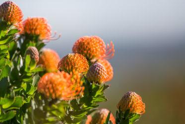 grootbos flowers