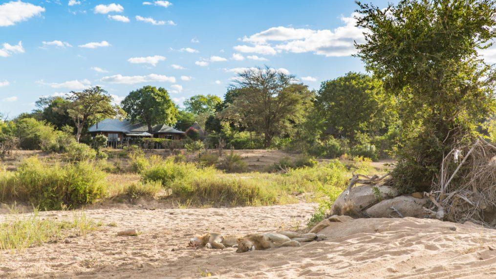 malamala lions& lodge
