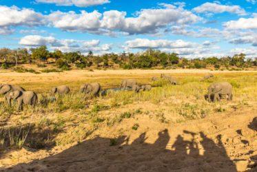 malamala elephants & people