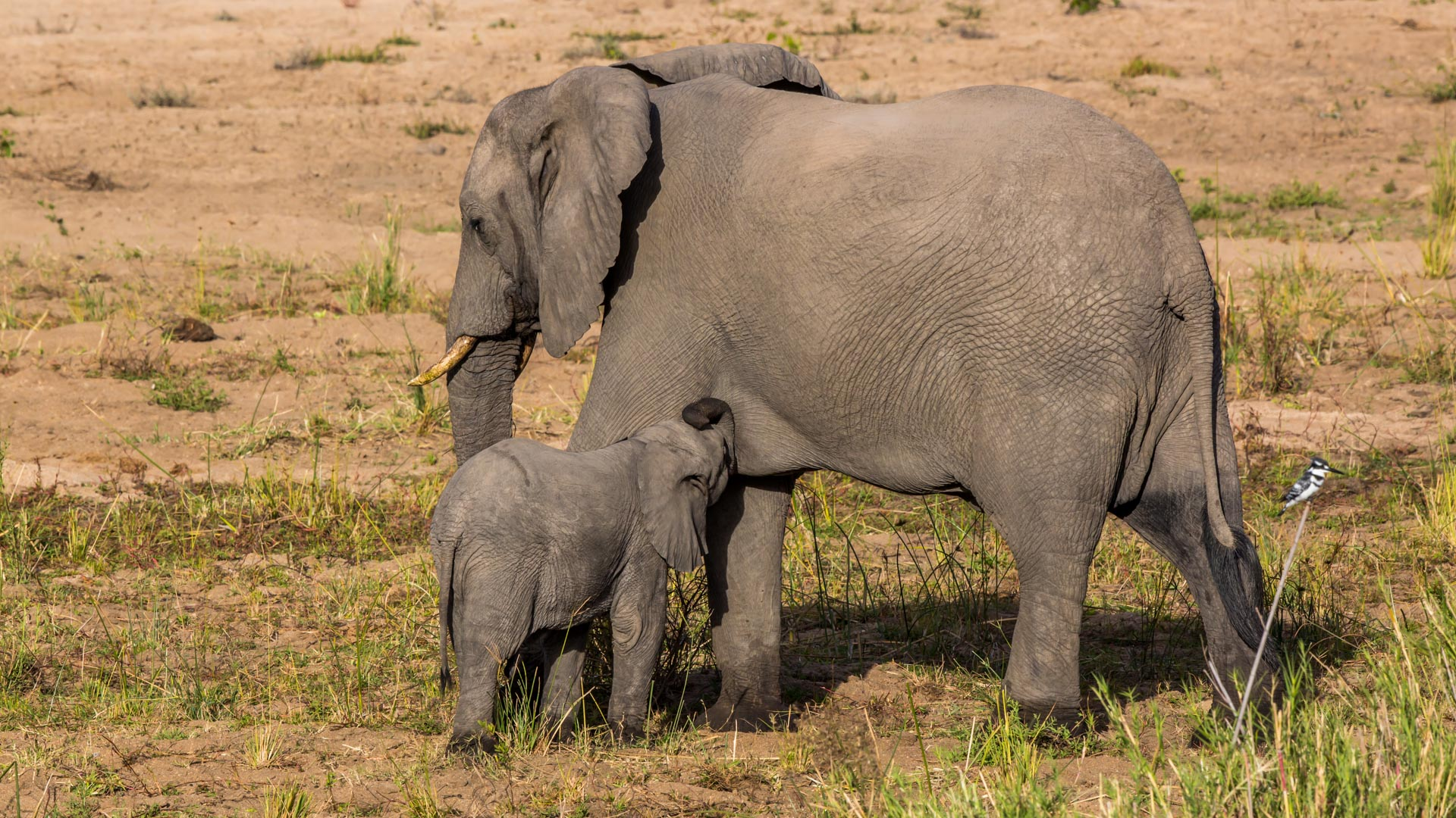 malamala elephants South Africa