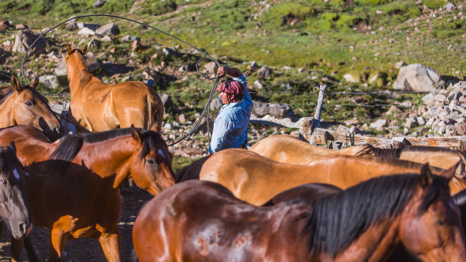 Tak gaucho łapią konie na lasso. Andes crossing
