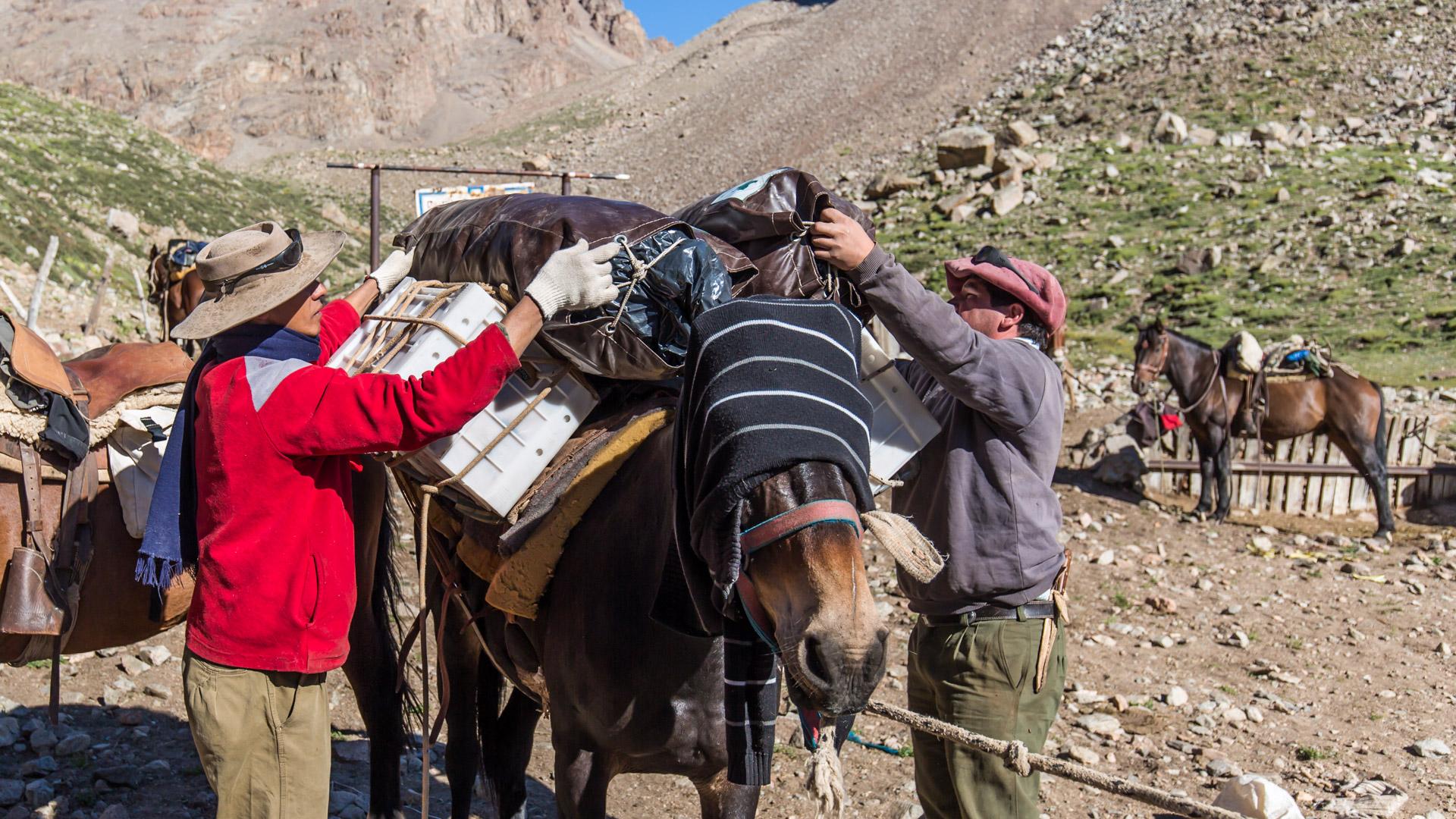 Nasze dzielne muły juczone ciężarami. Andes crossing