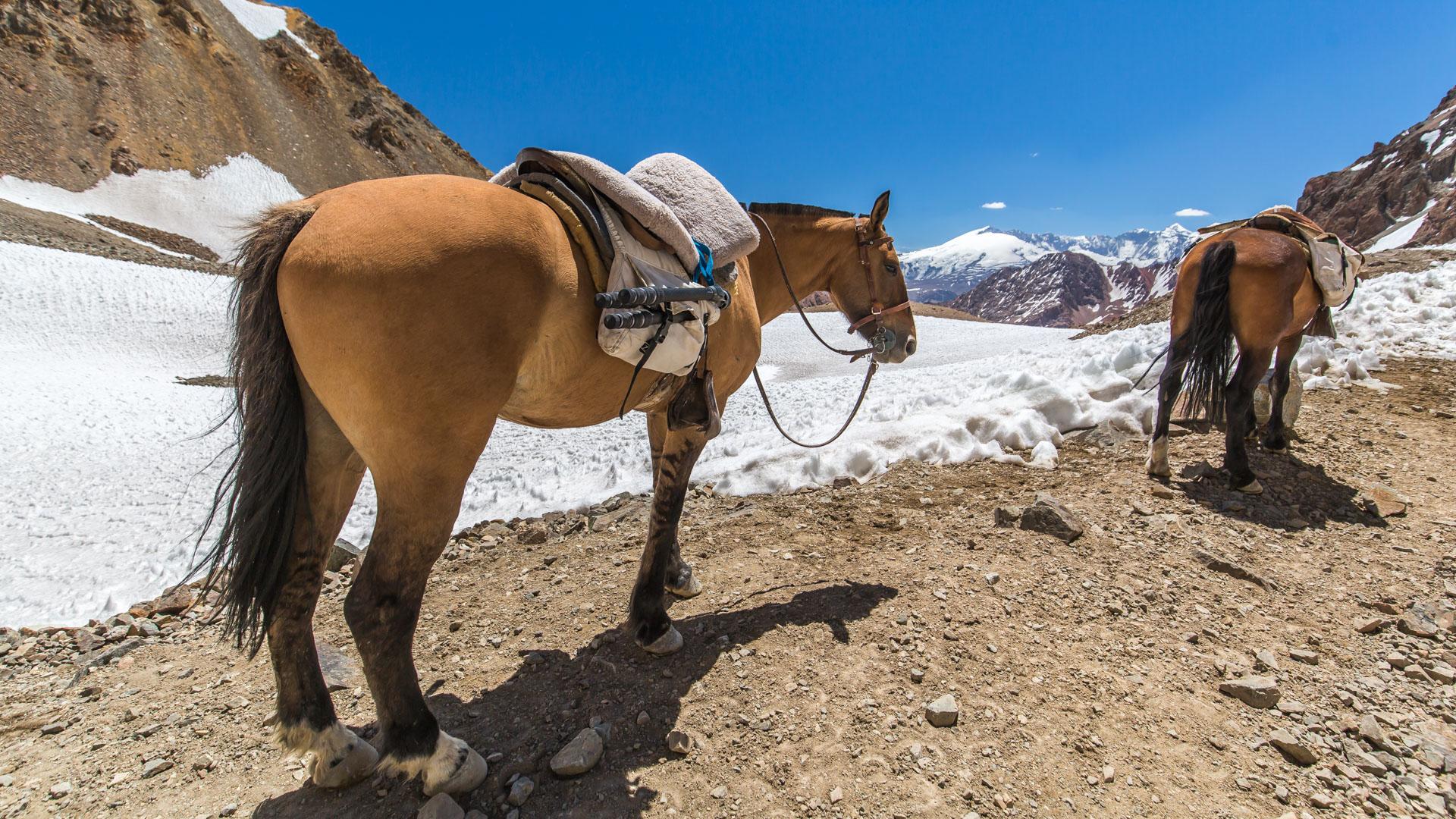 Mój dzielny koń po przejściu najtrudniejszego odcinka zejścia z Portillo Argentino