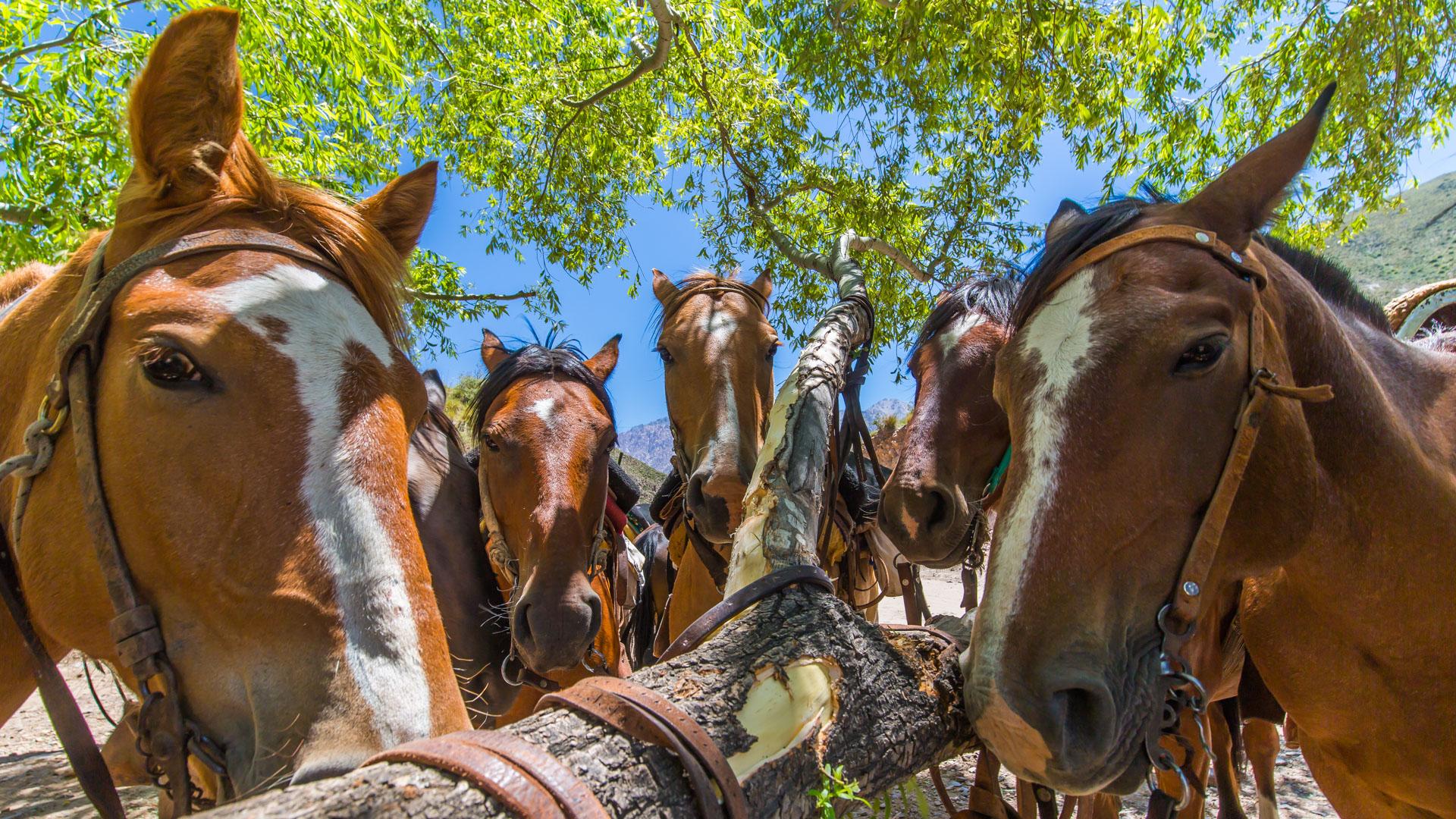 Konno przez Andy. Tajna narada koni na postoju.