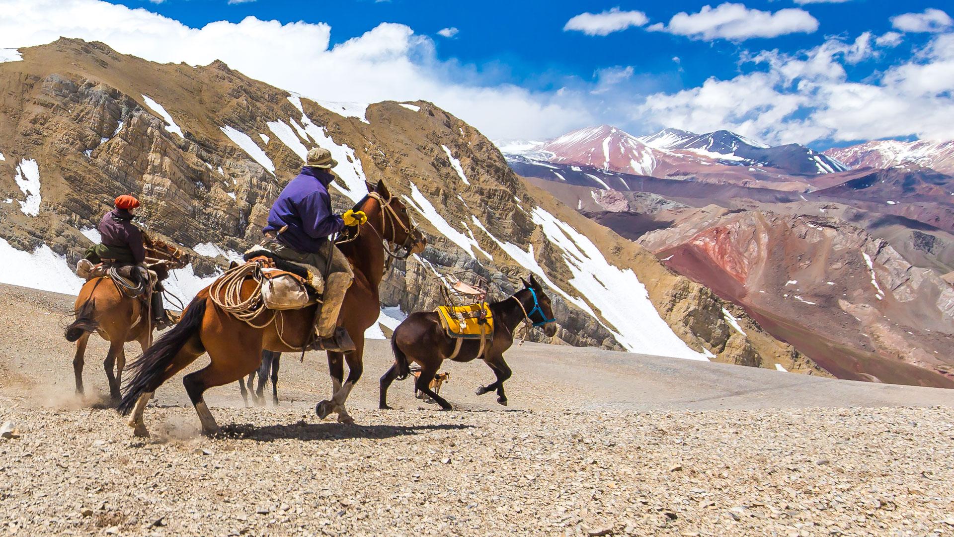 Konie i muły wracają na stronę argentyńską
