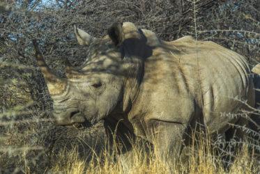 Black Rhino Erindi