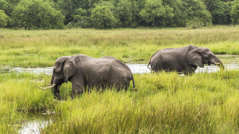 safari z dziecmi