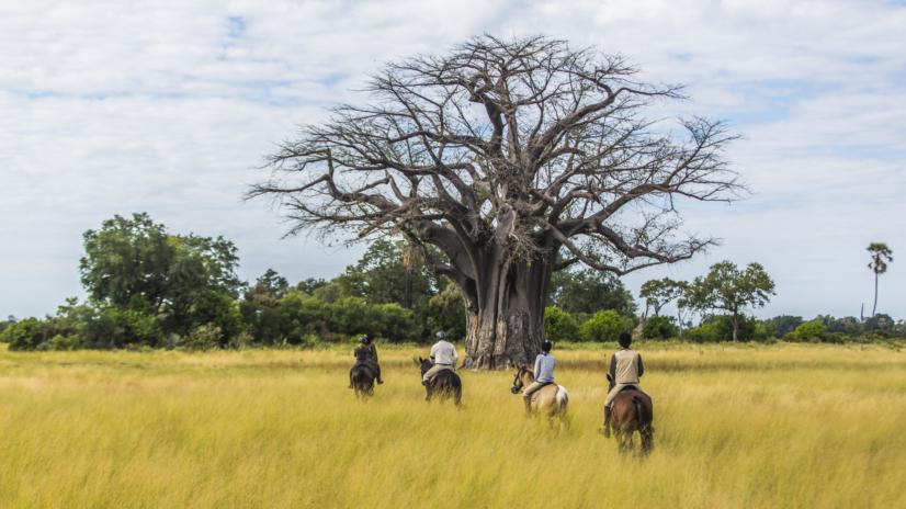 Safari konne w Afryce