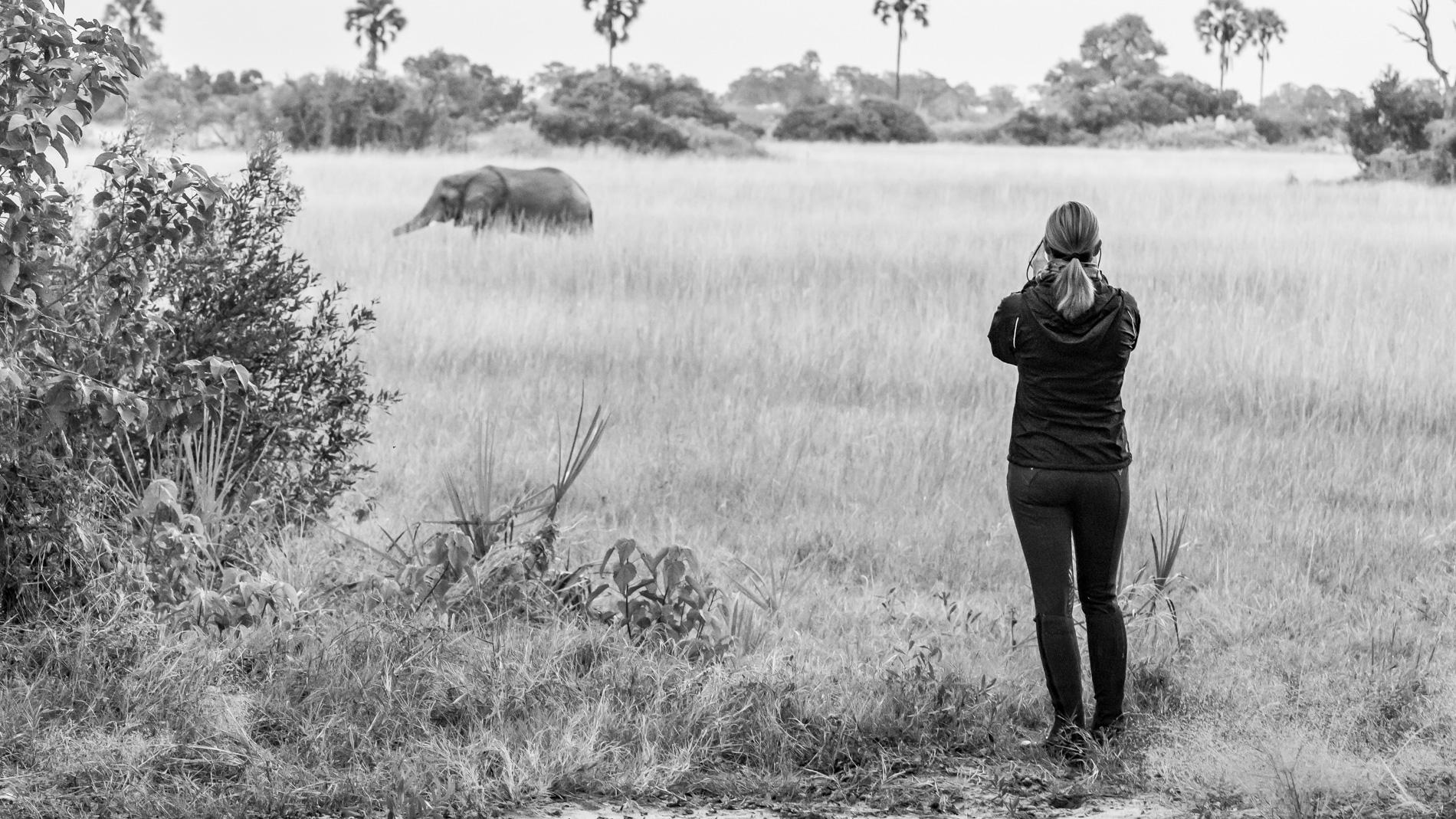 Obserwacja słoni w Macatoo Camp Okavango