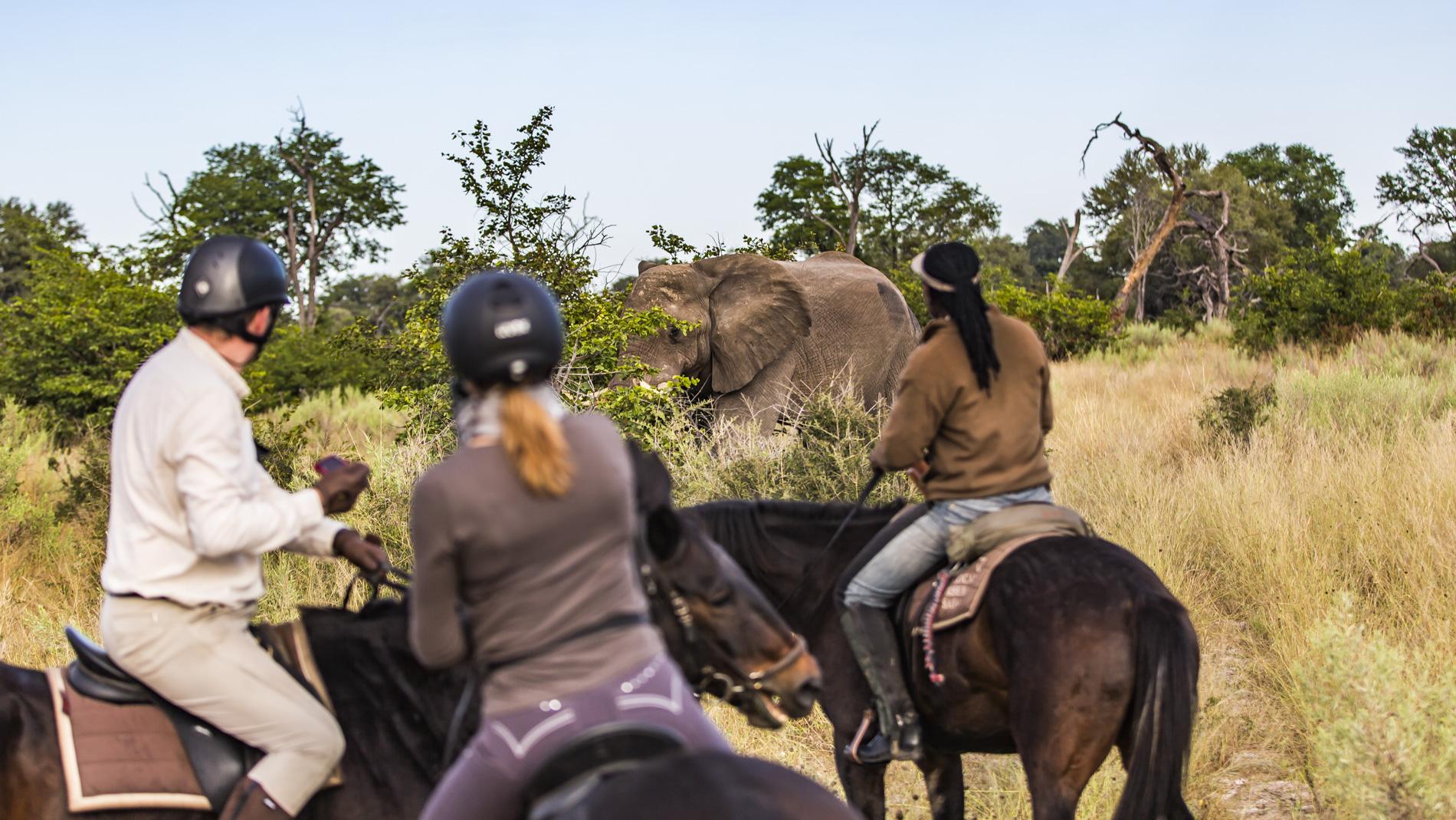 African Horseback Safaris Elephant George