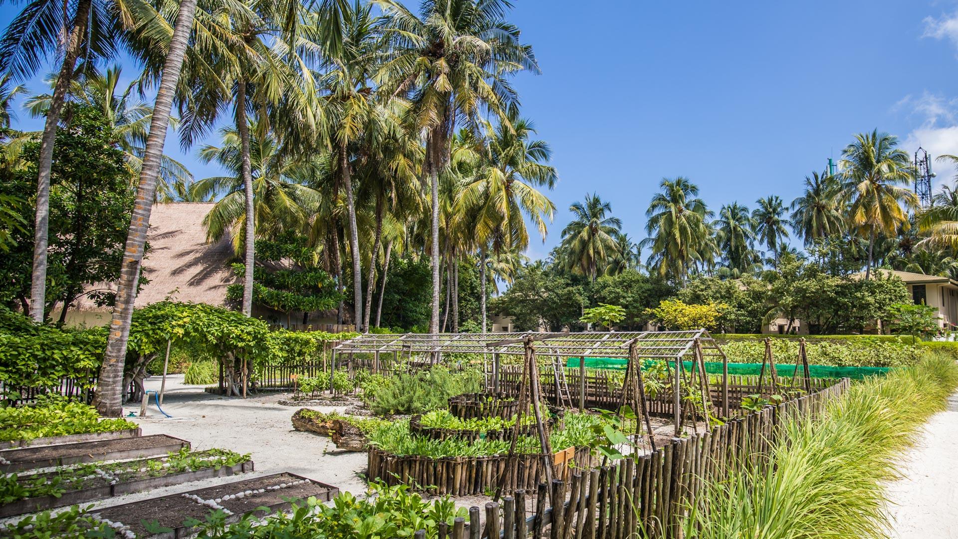 Organic garden at Como Maalifushi