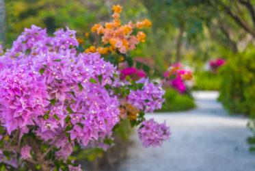 W FS Kuda Huraa znajdziecie mnóstwo gatunków kwiatów