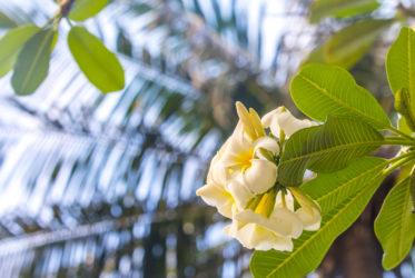 Flora Malediwy