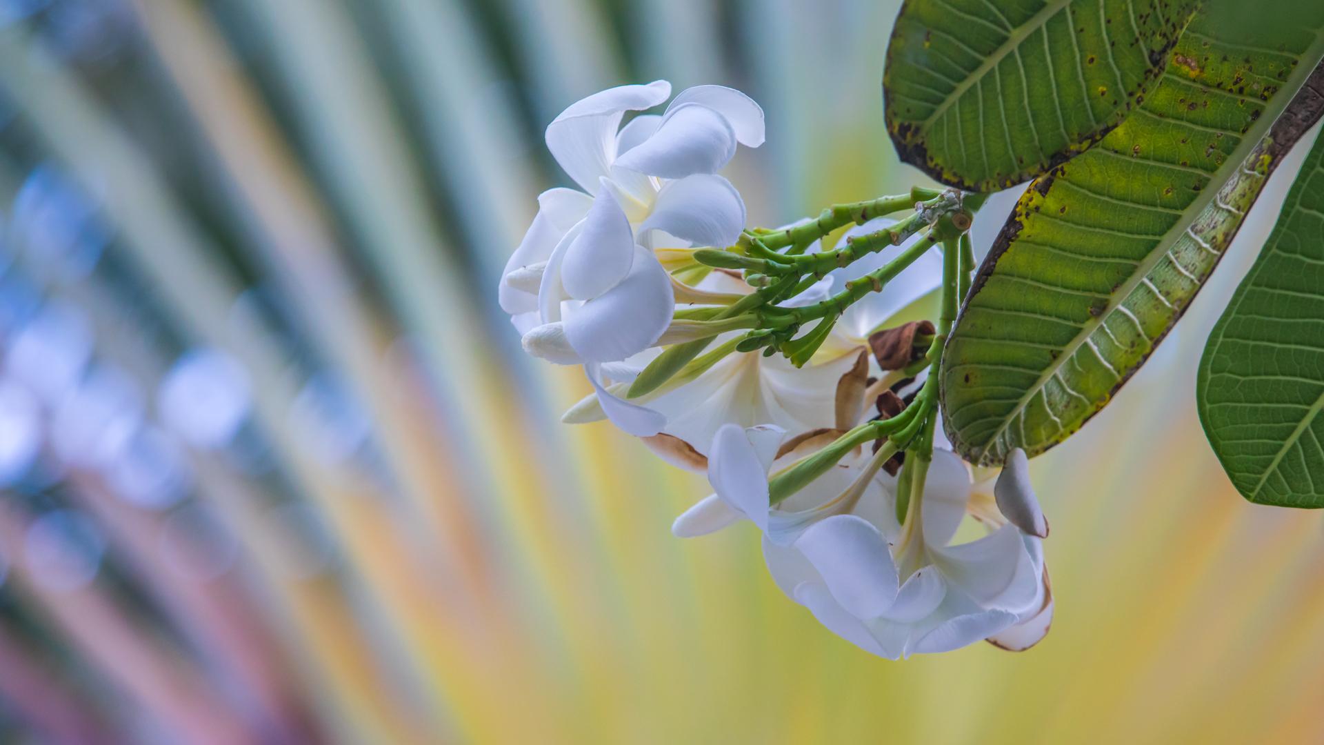 Kuda Huraa flowers everywhere