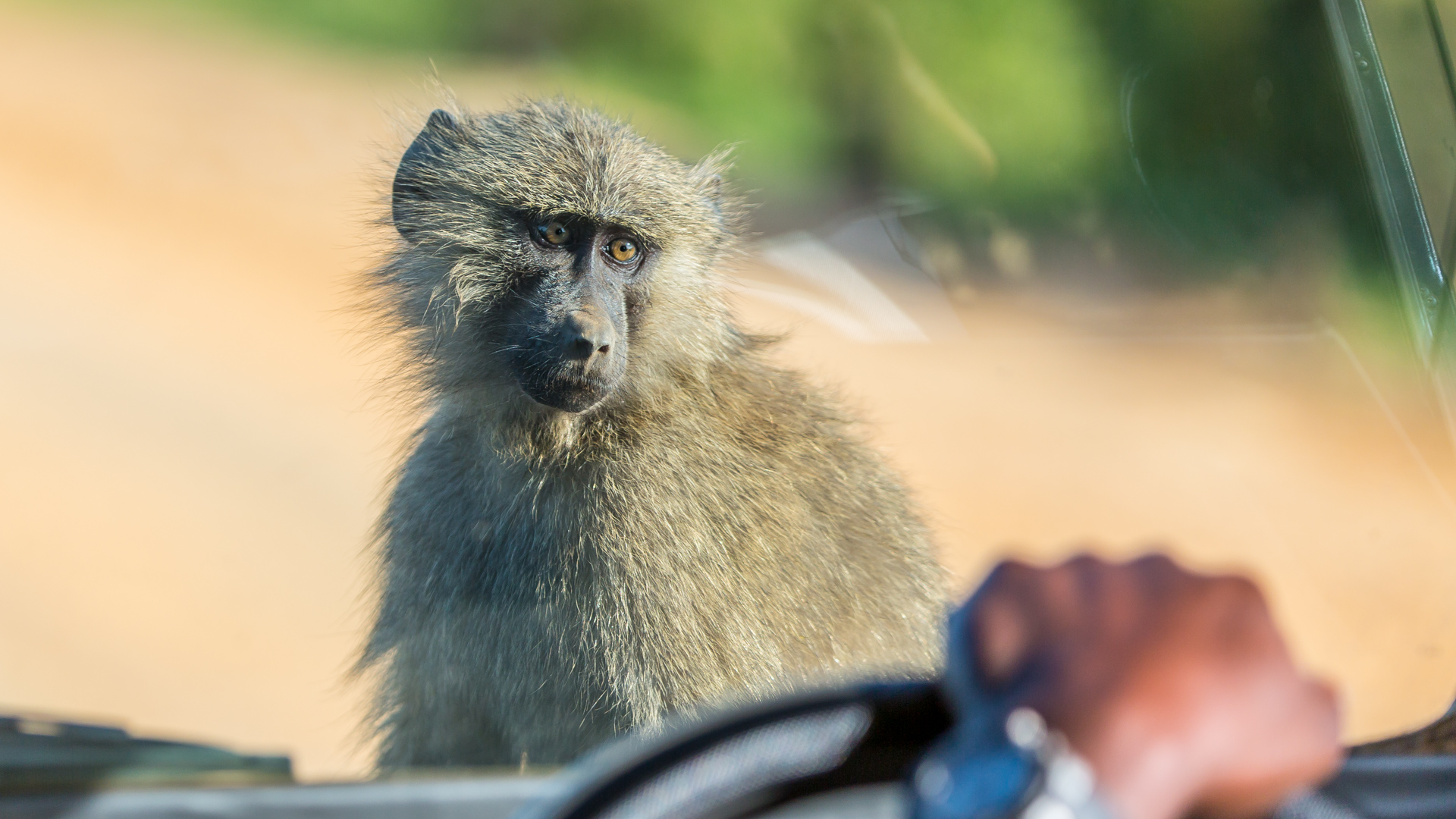 Hitchkiking in Uganda - easy peasy case ...