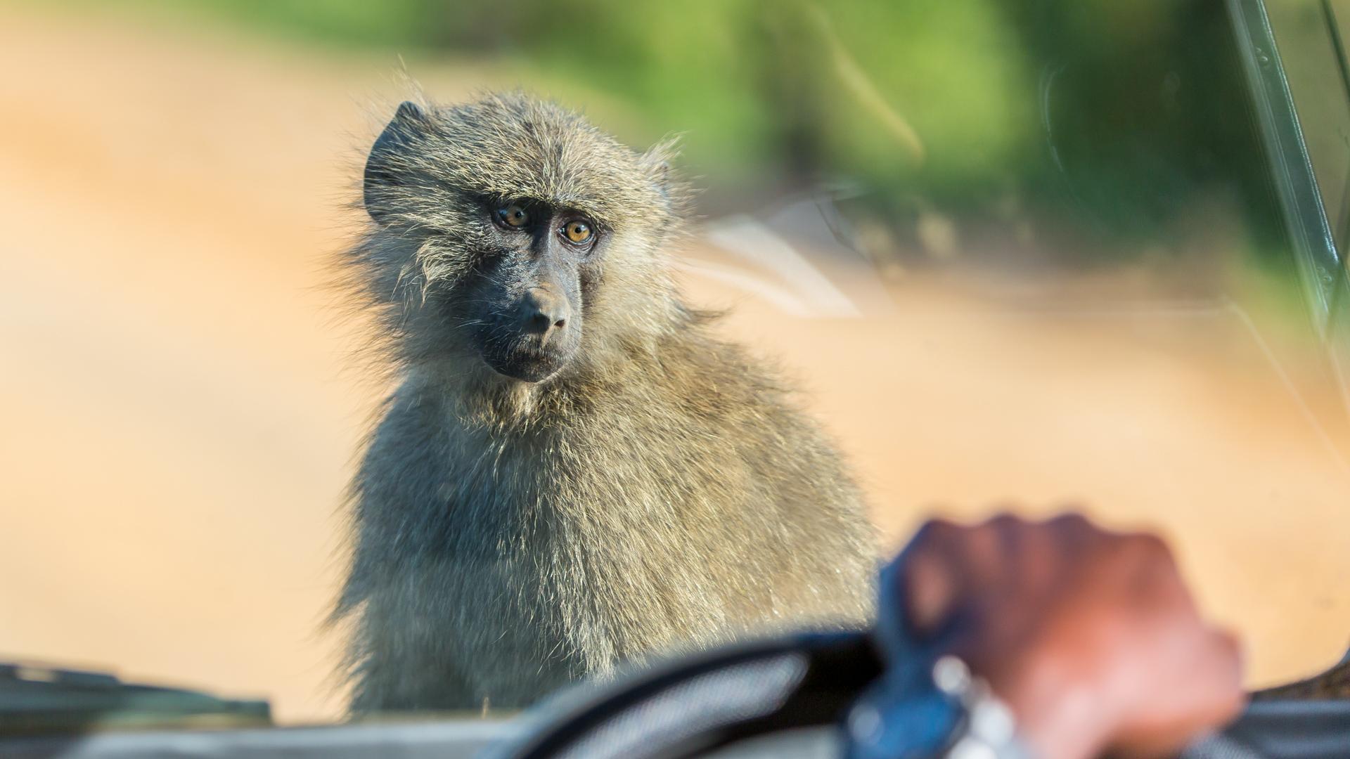 Hitchkiking in Uganda - easy peasy case ...