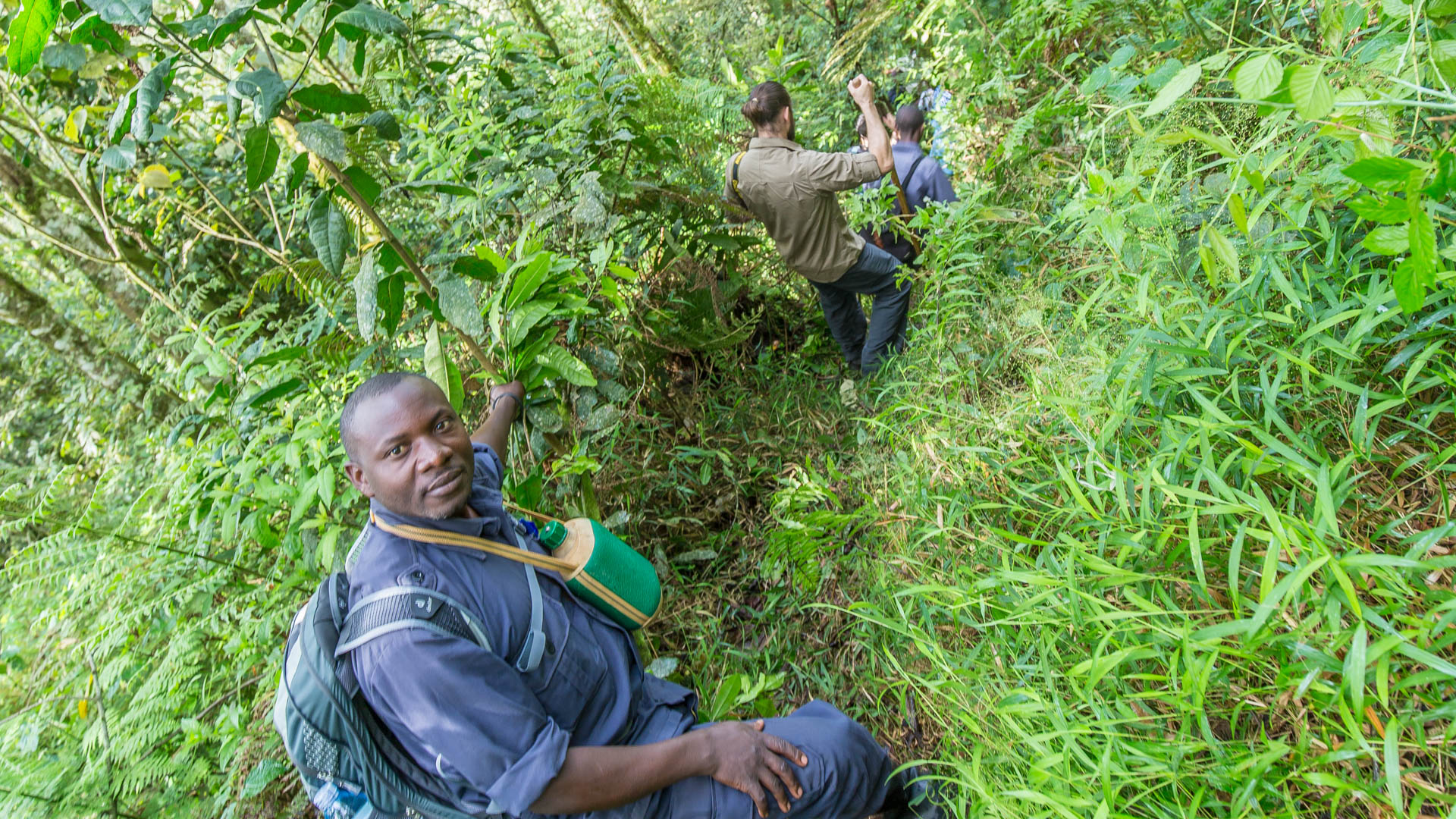 Mountain Gorilla tracking in Bwindi Impenetrable Forrest